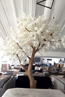 Giant Blossom Tree for Hire in Cape Town
