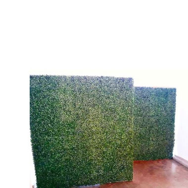 Green Plant Wall  -
